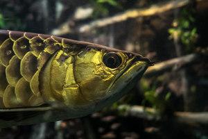 ペット不可物件_熱帯魚