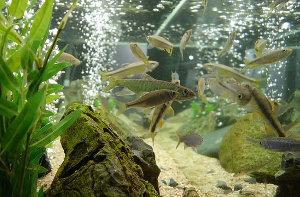 一人暮らしでも飼いやすい_熱帯魚