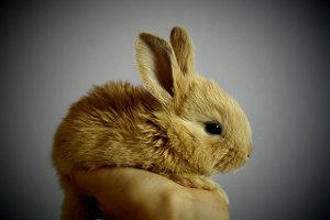 ペットの健康管理_うさぎ