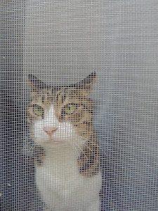 ゴキブリの侵入経路_窓