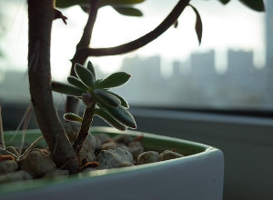 観葉植物の復活方法